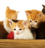 Kitties in a Bowl poster