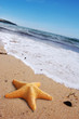 Starfish on a lonely beach.