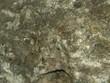 Textura roca