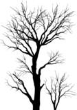 Fototapety trees