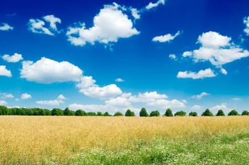 wheat field, blue sky, clouds