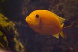 aquarium #2 poster