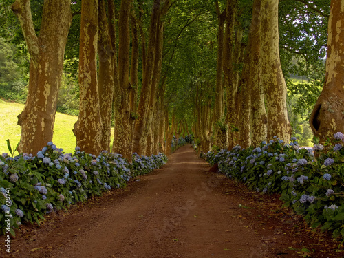 path with tree on two side in azores - 3729741