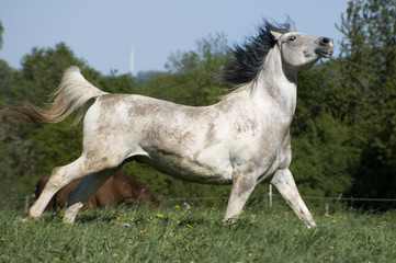 Horse has fun