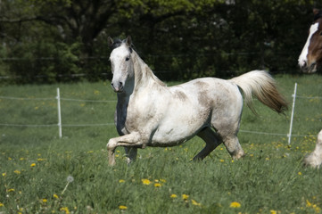 Horse turns on the pasture