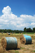 Field of straw bales on a sunny summer day