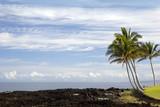 Volcanic Lava and Palms on Pacific Coast of Kona Island, Hawaii poster