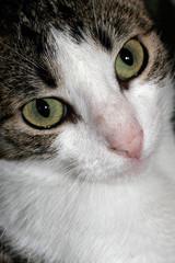 Gato de olhos grandes
