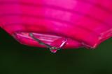 Rain drops dripping off garden lanterns poster