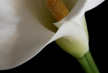 Branco, pureza