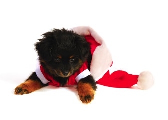 Puppy Dog in Santa Suit