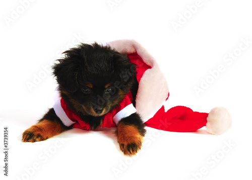 Puppy Dog in Santa Suit