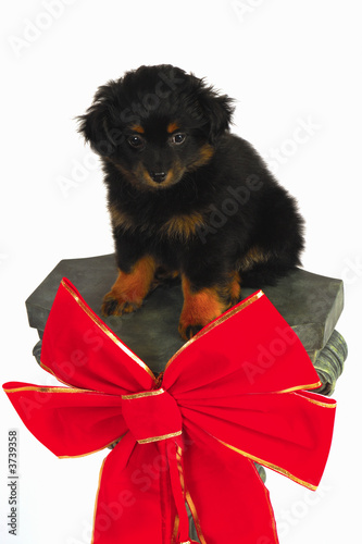 Puppy Dog Chritmas Isolated Vertical
