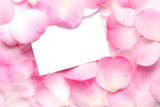 Blank gift card on pink petals, with raindrops. poster