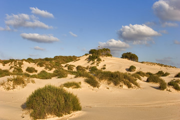 The sandy dunes covered by bushes