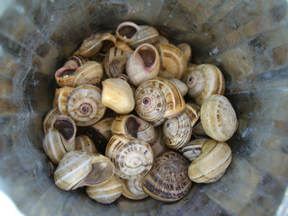 snails in bucket