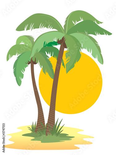 海岛办事处海滩热带白天白色砂绿色美丽的自然叶载体阳光普照风景名胜