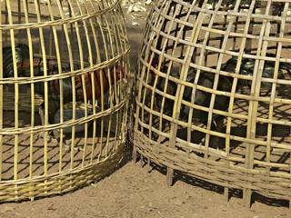 Kampfhähne im Käfig