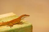 Alert Lizard poster