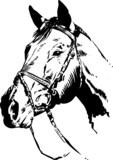 Fototapety Horse Head Vector