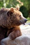 Bear v klidu