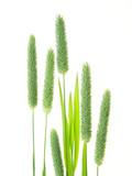 green grass - 3764995