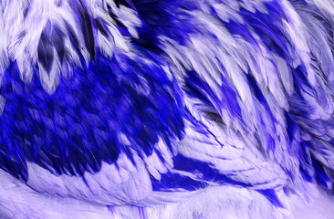 Abstract Blue Feathers
