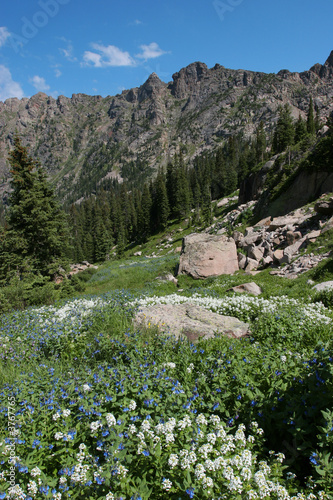 Indian Peaks Wildflowers