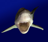 Fototapete Australien - Schranke - Fische