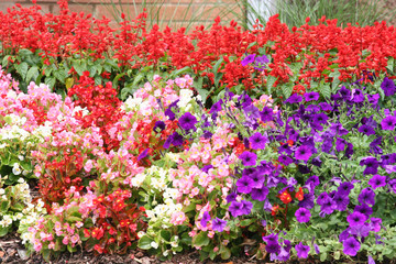 Many Colored Flowers