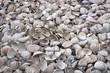 Leinwanddruck Bild - empty broken shells beached on shore as result of storms