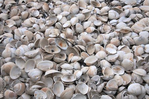 Leinwanddruck Bild empty broken shells beached on shore as result of storms