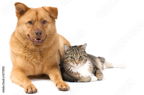 Dog and Cat posing for the camera (white background).