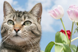 Kitty in the Garden poster