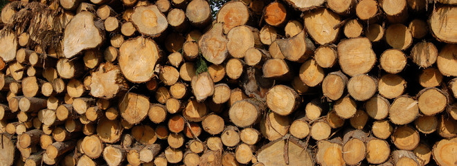Logs pile