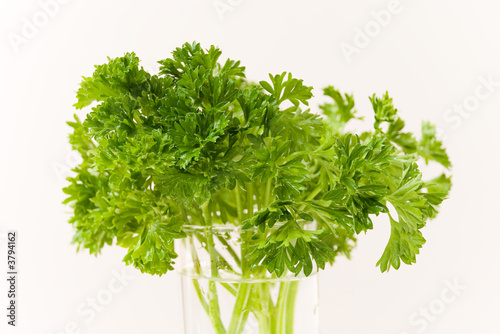 Fresh Parsley on the Water Pot