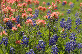 Bluebonnets and Paintbrushes poster