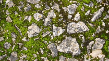 Mousse entre les pierres