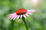 Wildflower-pink/orange poster