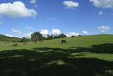 Horses grazing in the meadow poster