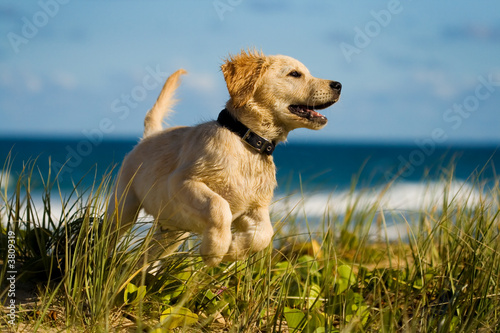 Poster Puppy jumping on the beach