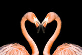 Two pink flamingos like heart isolated on black