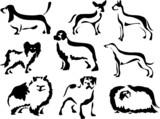 dog breeds poster