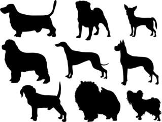 dog bree silhouettes
