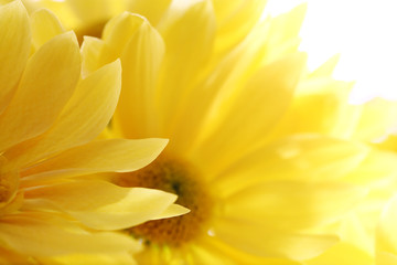 Sunflowers bouquet over white background. Close-up.