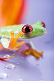 Fototapete Animals - Amphibians - Reptilien / Amphibien