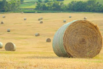 round bales in field