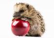 Quadro Happy hedgehog