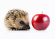Hedgehog & Red Apple