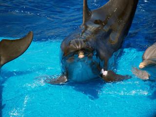 Delfino simpatico